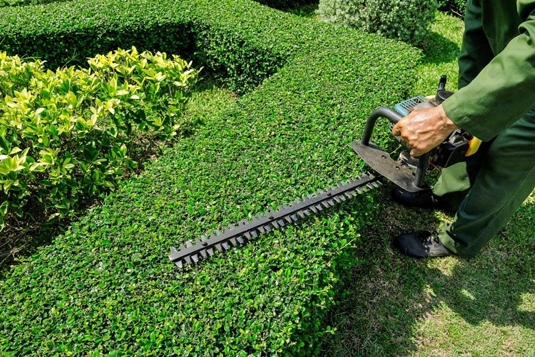 Chiffrage entretien de jardin