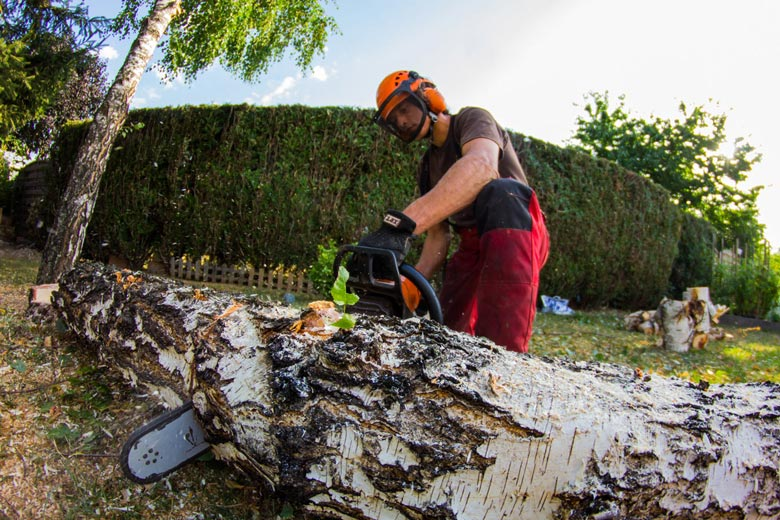 Prix abattage d'arbre